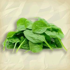 Spinach Espinaca